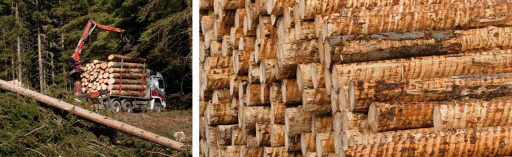 Holz Abtransport und Rundholzlager