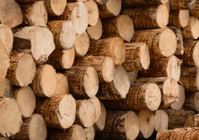 KOHLBACHER Holzindustrie - Rundholzeinkauf und Produkte